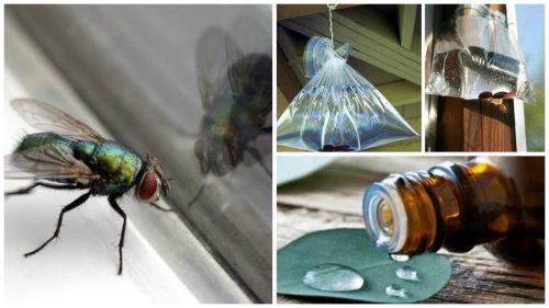 7 φυσικές λύσεις για να απαλλαγείτε από τις μύγες.