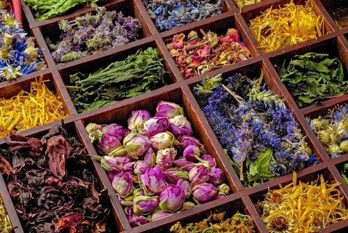 Αποτρέψετε τις κολπικές μυκητιάσεις - Διάφορα βότανα και φυτά
