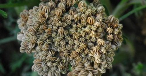 βότανα που αυξάνουν την ερωτική διάθεση
