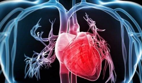 Οφέλη του μπρόκολου - Ψηφιακή αναπαράσταση καρδιάς