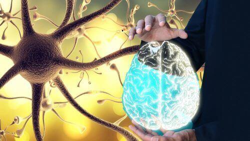 Πνευμονογαστρικό νεύρο: το κλειδί για να βελτιώσετε την υγεία σας!