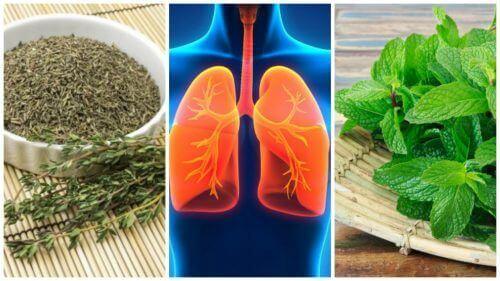 8 βότανα για πιο υγιείς πνεύμονες