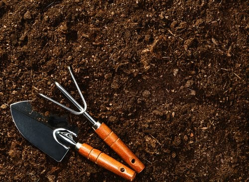 πώς να παράγετε τα δικά σας σπιτικά μύρτιλα