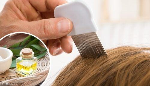 6 σπιτικές θεραπείες για να απαλλαγείτε από τις ψείρες