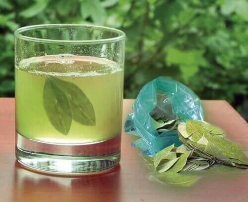 Διαλύστε τις πέτρες στα νεφρά - τσάι αβοκάντο
