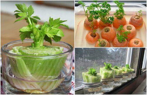 5 λαχανικά που μπορείτε εύκολα να ξαναφυτέψετε