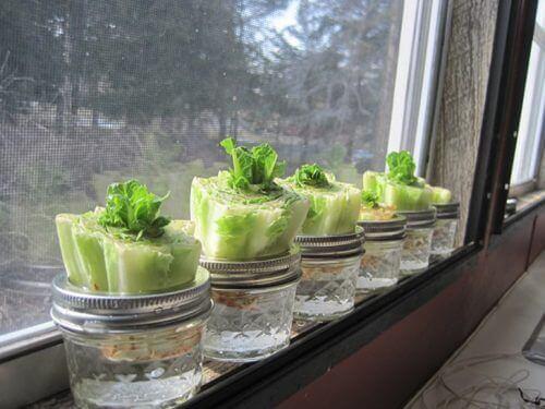 πράσινη σαλάτα- λαχανικά που μπορείτε εύκολα να ξαναφυτέψετε