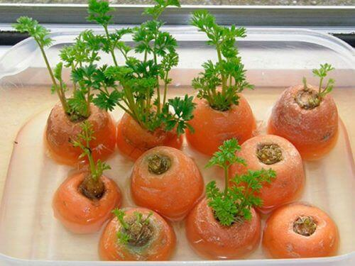 λαχανικά που μπορείτε εύκολα να ξαναφυτέψετε - καροτα