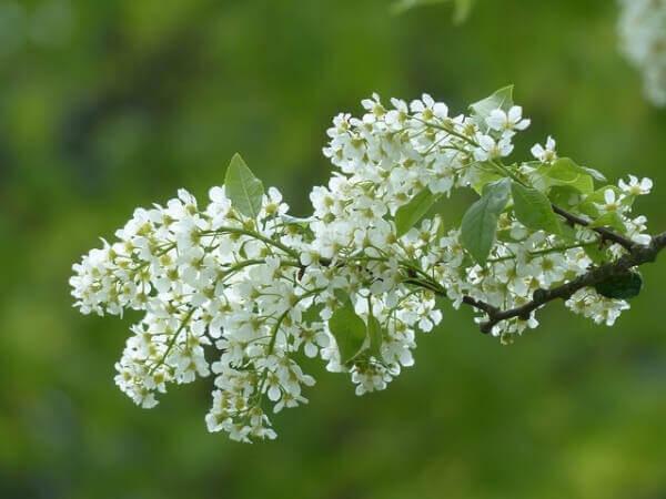 5 φαρμακευτικά βότανα για να καταπολεμήσετε την κατάθλιψη, αγγελική