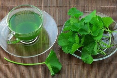 Μειώστε την αρτηριακή σας πίεση με αυτές τις πέντε θεραπείες με βότανα, σέλινο