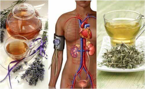 Μειώστε την αρτηριακή σας πίεση με 5 θεραπείες με βότανα