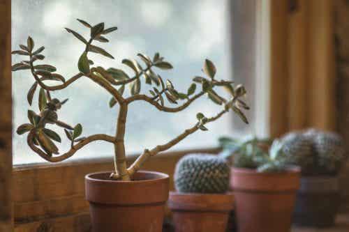 7 πλεονεκτήματα του να έχετε κάποιο φυτό στο σπίτι