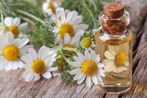 φαρμακευτικές χρήσεις του χαμομηλιού