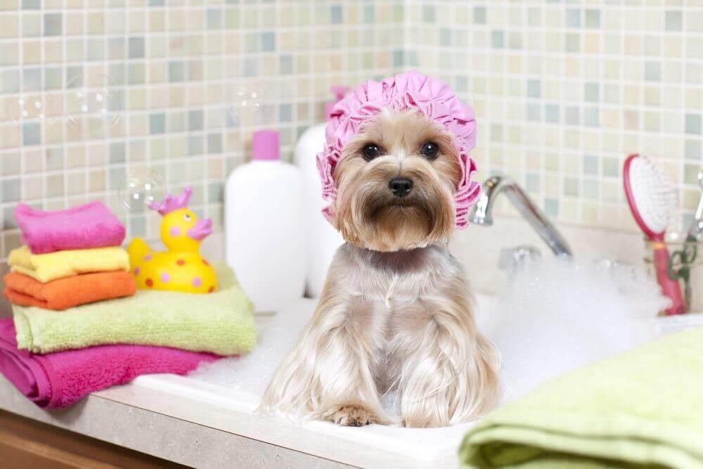 σκύλος σε μπανιέρα