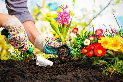 5 ιδέες για να δημιουργήσετε έναν κήπο μινιατούρα στο σπίτι σας