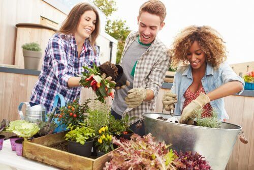 Δημιουργήστε έναν κήπο μινιατούρα στο σπίτι - Τρεις άνθρωποι φυτεύουν