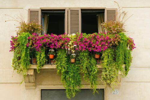 Δημιουργήστε έναν κήπο μινιατούρα στο σπίτι - Γλάστρες έξω από παράθυρο