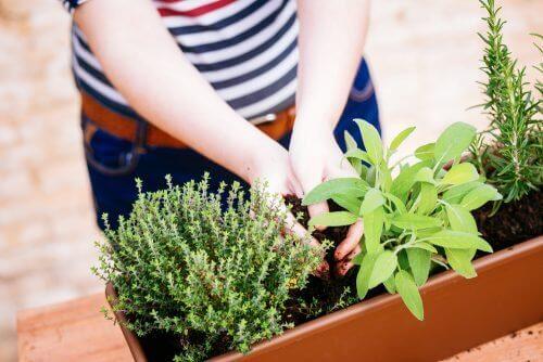 Δημιουργήστε έναν κήπο μινιατούρα στο σπίτι - Κοπέλα φροντίζει μια γλάστρα
