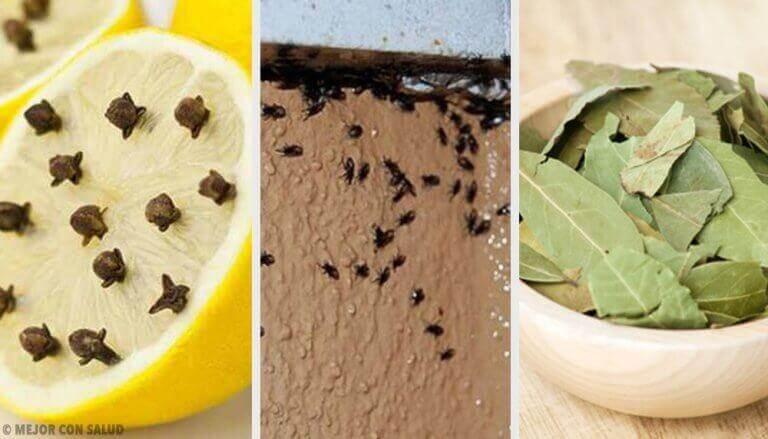 Απαλλαγείτε από τα αποκρουστικά έντομα με φυσικό τρόπο