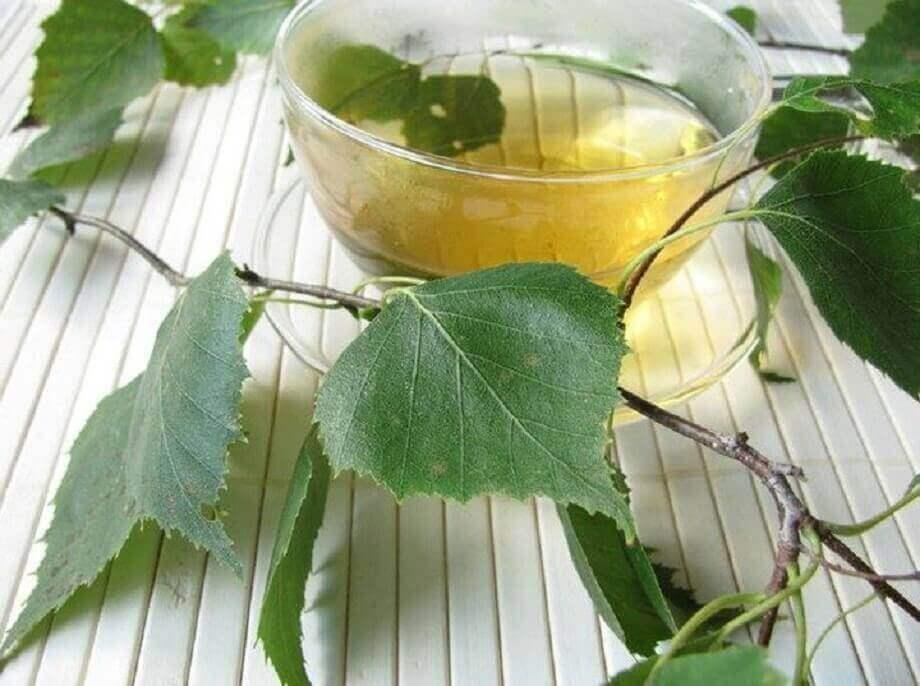 Θεραπείες για την κυστίτιδα με σημύδα