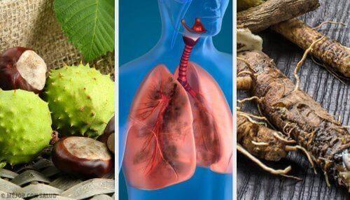 4 θεραπείες για να αναπνέετε καλύτερα και να ενισχύσετε τους πνεύμονες