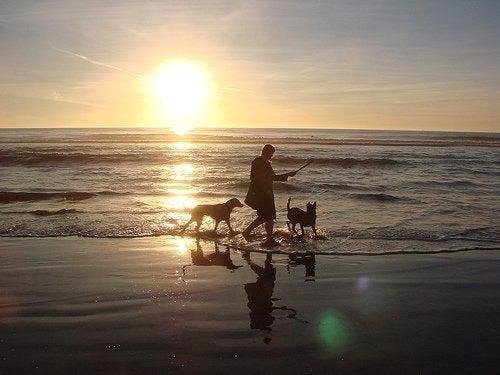 Καταπολέμηση της ψωρίασης γυναίκα στη θάλασσα με δύο σκύλους
