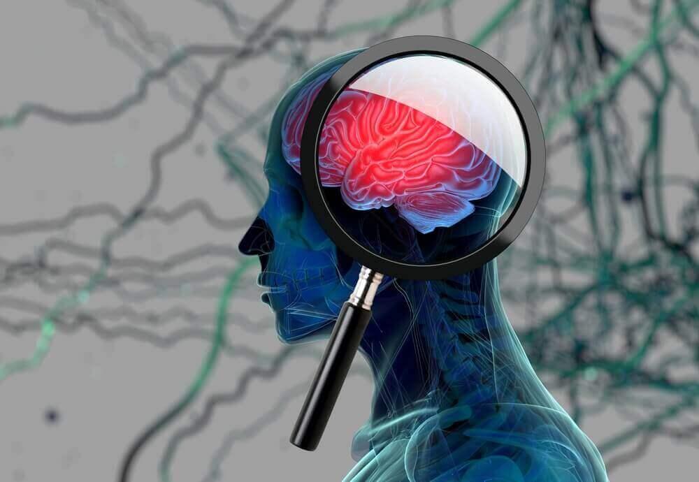 εγκέφαλος σε μικροσκόπιο