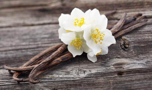 αρωματίστε το σπίτι βανίλια σε λουλούδι και σε κλωνάρια