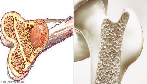 εσωτερικό απο οστά