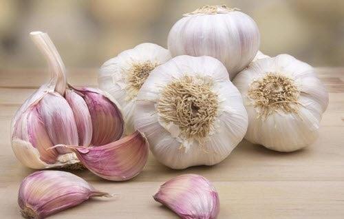 Πράγματα που πρέπει να έχετε υπόψη για να καλλιεργήσετε σκόρδο στο σπίτι σας