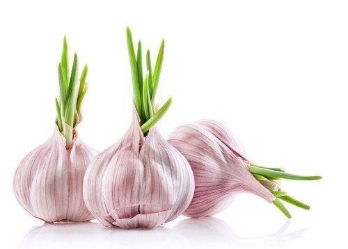Πώς θα καλλιεργήσετε σκόρδο στο σπίτι σας