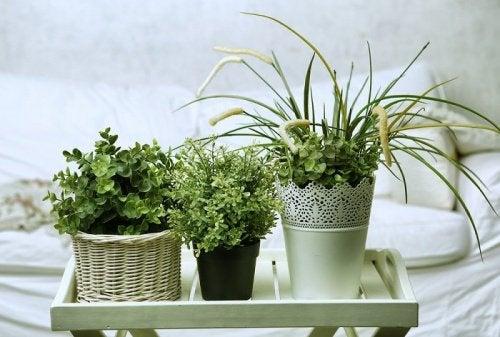 τρεις γλάστρες σε σπίτι, φυτά που μπορείτε να φροντίσετε εύκολα