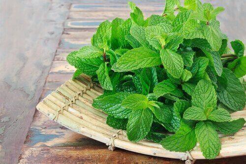 Σπιτικές θεραπείες με φύλλα δυόσμου