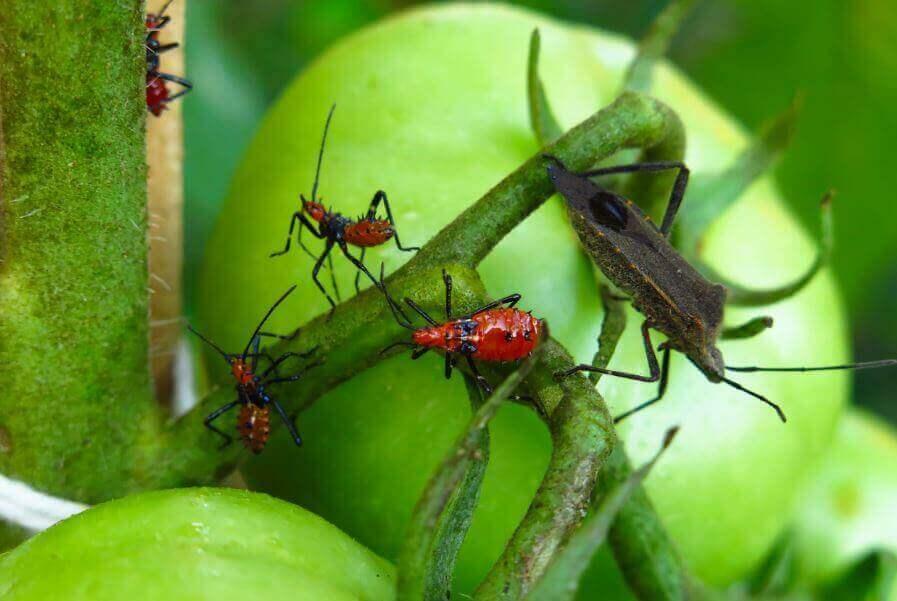 5 φυσικά δηλητήρια για να εξουδετερώσετε έντομα και παράσιτα