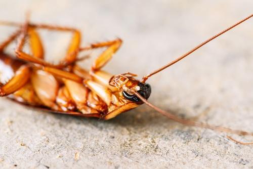 4 κόλπα για να κρατήσετε μακριά τις κατσαρίδες χωρίς εντομοκτόνα