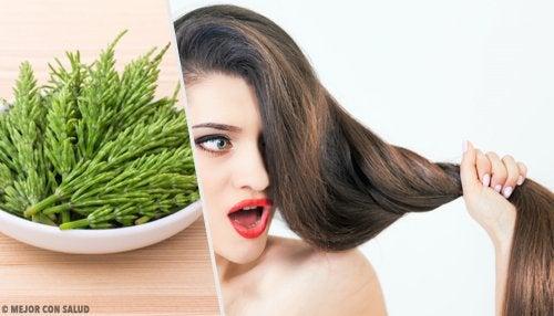 Ιδιότητες του εκουιζέτου - Εκουιζέτο και μαλλιά