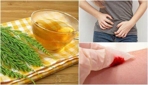Ιδιότητες του εκουιζέτου - Εκουιζέτο, πόνος στο στομάχι και αιμορραγία