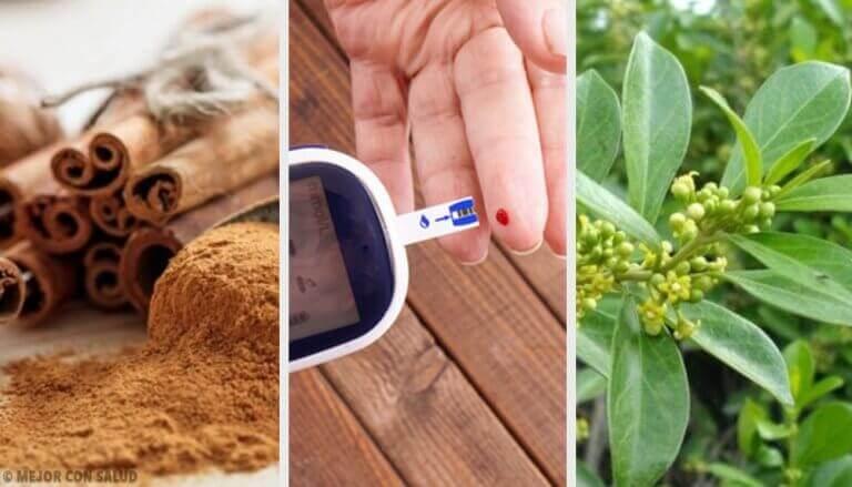 5 φαρμακευτικά φυτά για τον διαβήτη για πραγματικά αποτελέσματα!