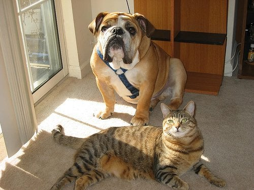 ένα κατοικίδιο στο σπίτι Σκύλος και γάτα