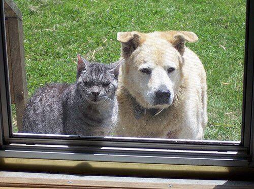ένα κατοικίδιο στο σπίτι Σκύλος και γάτα στον κήπο