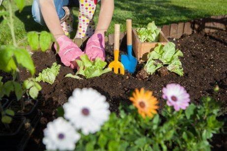 7 τρόποι να χρησιμοποιήσετε το ξύδι στον κήπο σας