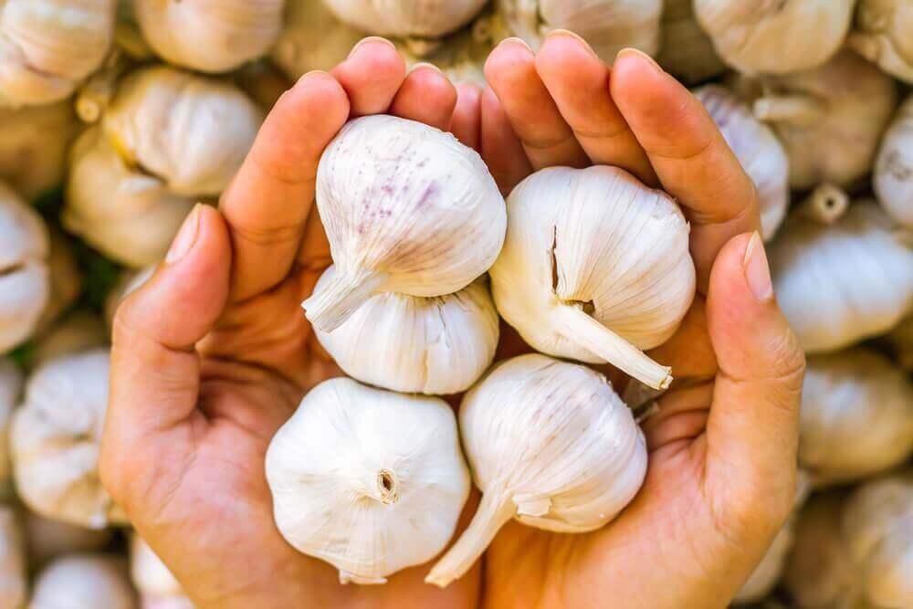 τη μυκητίαση του τριχωτού της κεφαλής Χέρια που κρατάνε σκόρδα