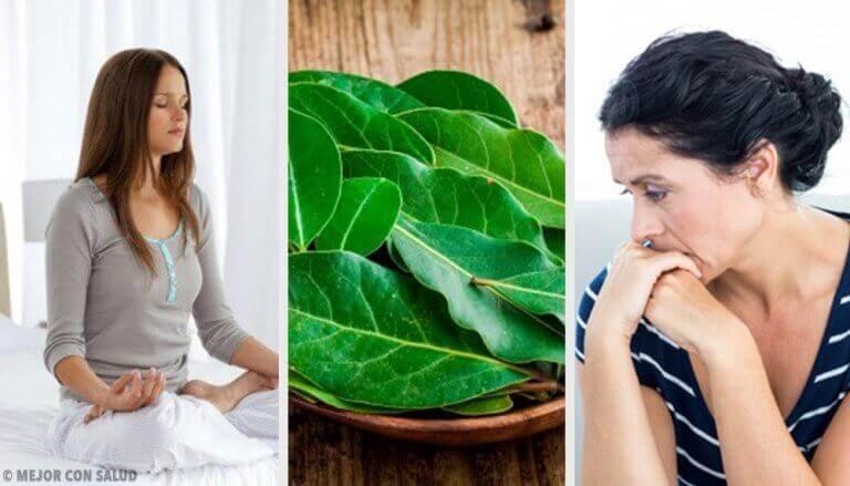 Φύλλα δάφνης: 7 οφέλη για την υγεία που δεν γνωρίζατε