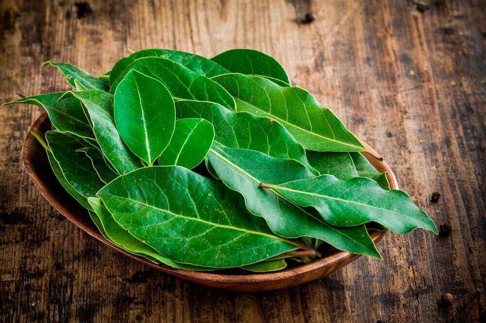 απαλλαγείτε από το φλέγμα με φύλλα δάφνης