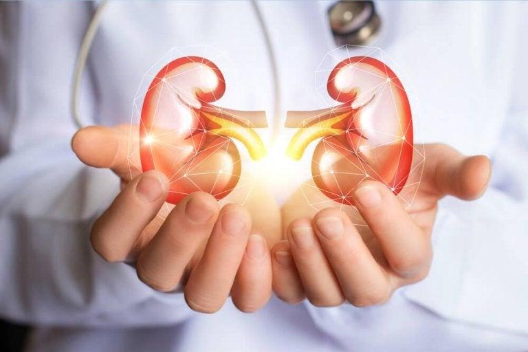 Απίστευτη αποτοξινωτική δίαιτα για την εκκαθάριση των νεφρών