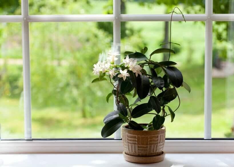Απολυμάνετε το υπνοδωμάτιό σας - Γλάστρα σε παράθυρο