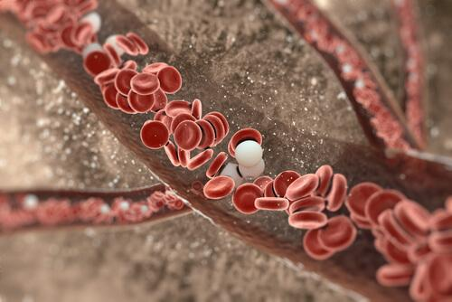 Ερυθρά αιμοσφαίρια