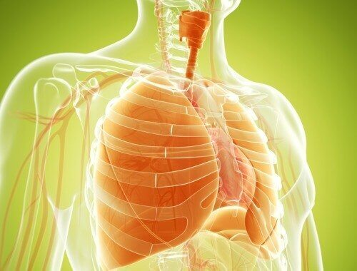 Αποτοξίνωση των πνευμόνων σας με φυσικές θεραπείες