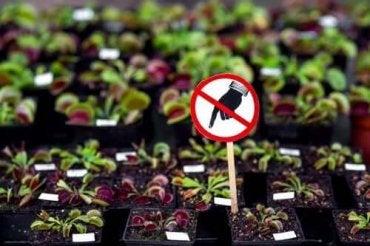 7 επικίνδυνα φυτά που δε θα πρέπει να έχετε στο σπίτι