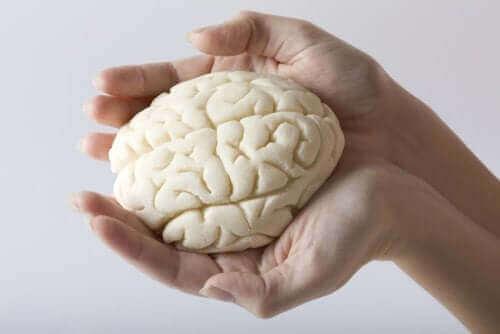 Γυναίκα κρατά πλαστικό εγκέφαλο